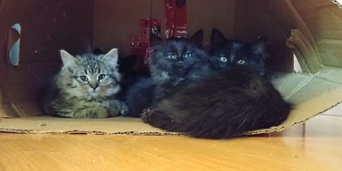 stray3 cat mom brings her babies to meet the woman who took care of her 02