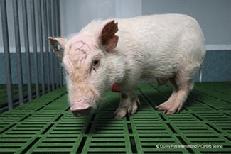 Ισπανία: Σε αναστολή εργαστήριο που έκανε πειράματα σε ζώα - Στη δημοσιότητα βίντεο που κακοποιούνται