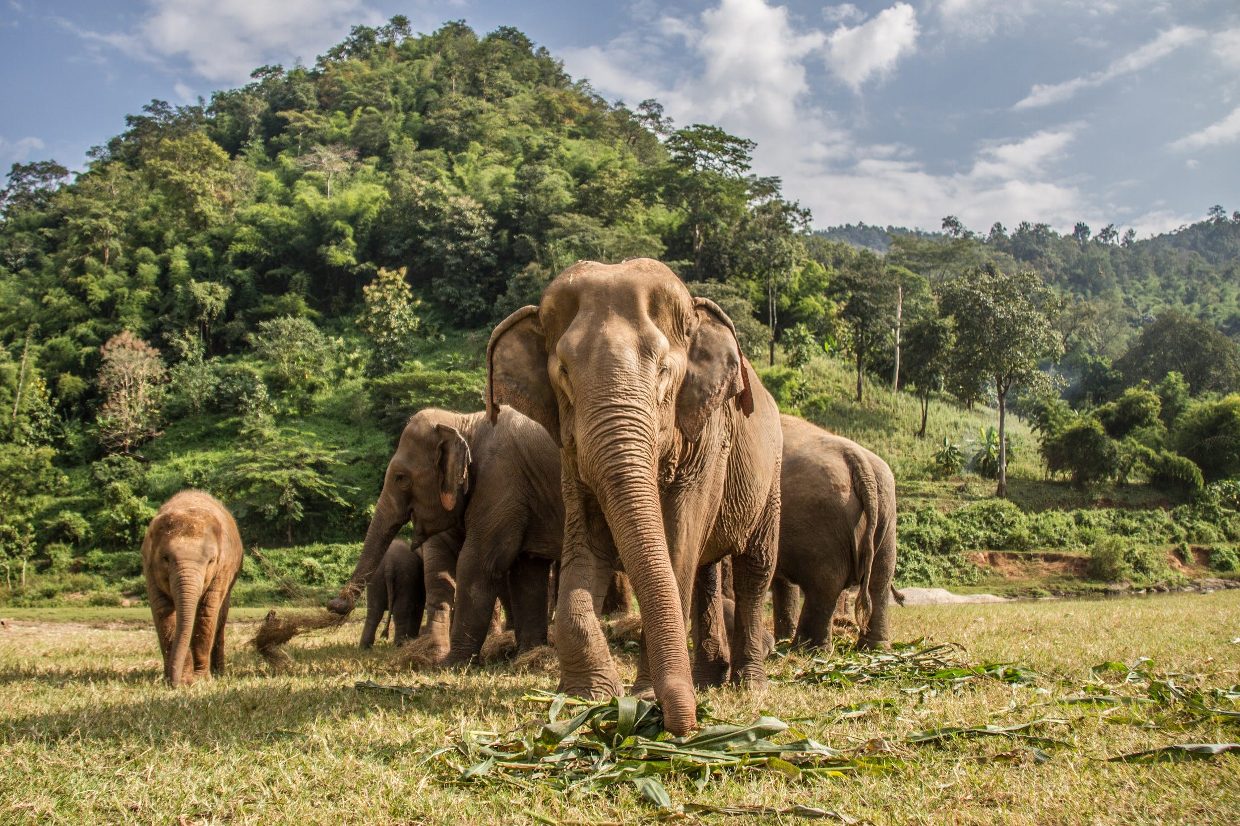 elephants thailand
