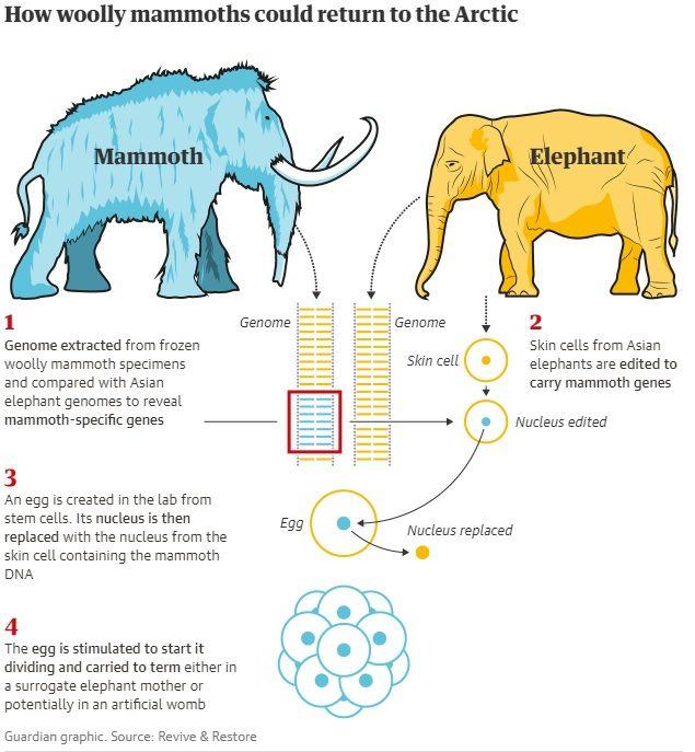 Τα μαμούθ επιστρέφουν στη γη δέκα χιλιάδες χρόνια μετά την εξαφάνισή τους